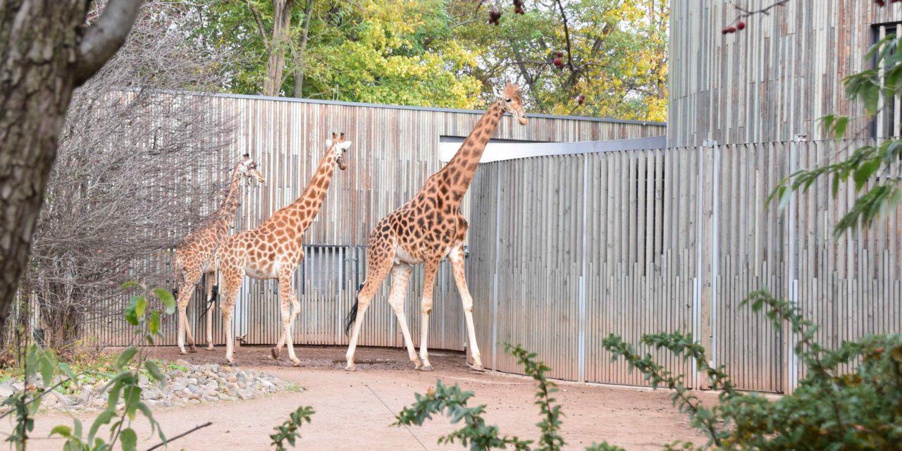 Der Zoo Dresden