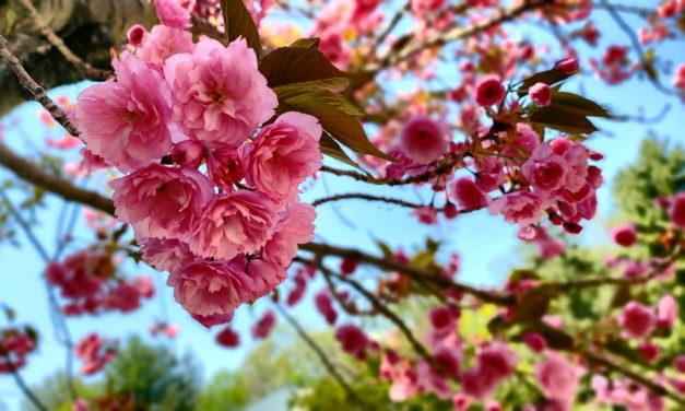 Frühjahrsmarkt Dresden