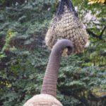 Ein Elefant greift Futter mit seinem Rüssel im Zoo Dresden