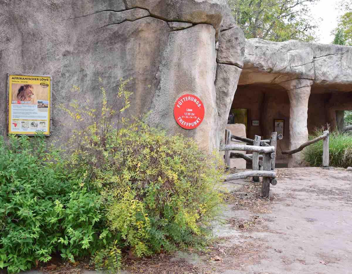 Der Fütterungs-Treffpunkt am Löwengehege im Zoo Dresden