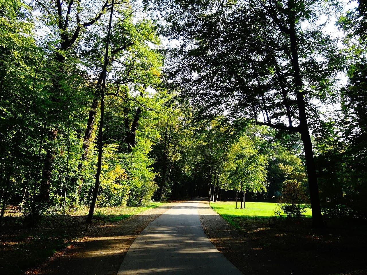 Friedrich-Bouché-Weg im Großen Garten Dresden